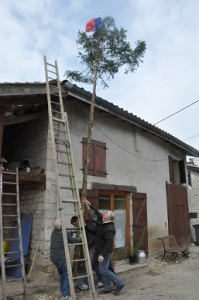 Sapins municipales 2014 DROM (5)