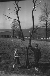 Un arbre à cochonnets . . . le 1er avril 1995 à Drom
