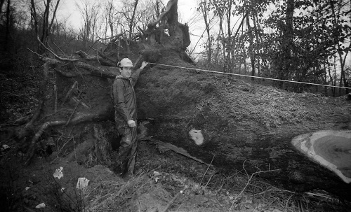 Un professionnel de Drom est chargé de la dégager. Il estime son poids à 20 tonnes ; à 1,30 mètre, sa circonférence est de 4,53 mètres, et sa hauteur totale d'environ 20 mètres.