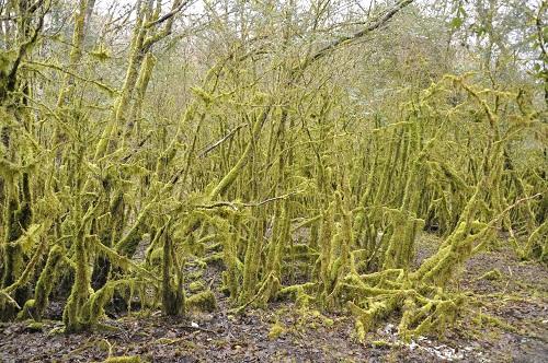 Dans le bois du Clapay . . .